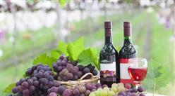 2018年1-5月全國葡萄酒產量數據分析:產量連續18個月下滑!(圖)