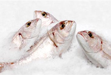 捕鱼大户哪家强?渔业A股上市公司业绩大比拼:国联水产排第一!(附图表)