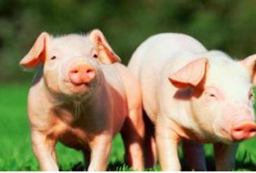 2017年四川生猪生产情况分析及2018年预测(附图表)