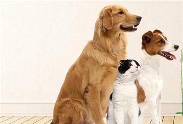 2018中国宠物行业市场调查报告(附全文)
