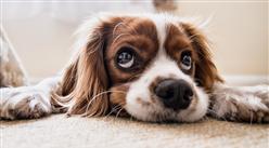 2018年中国宠物规模进一步扩大   宠物医疗备受资本关注(附宠物行业融资表)