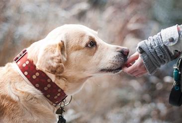 最严遛狗规定:7点至22点禁止遛狗?2018年中国宠物行业市场规模将突破1700亿