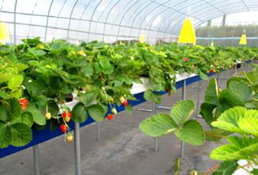 """数字农业成功案例分析:阿里云与海升集团合作研发智能农事系统 打造""""数字农业"""""""