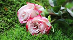2018年中国玫瑰花产业规模有望突破90亿 四大趋势助力花卉市场越开越旺(图)
