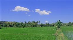 农业物联网助力乡村振兴 何为农业物联网?