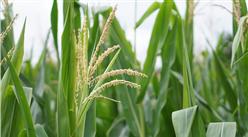 如何创建现代农业产业园?五大现代农业产业园成功案例分析(图)