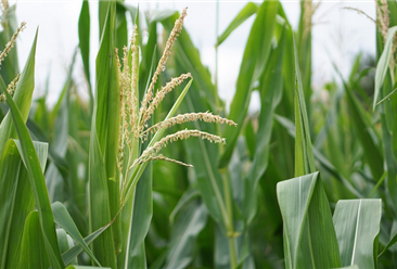 四川力争到2022年创建省级现代农业园区150个以上 现代农业产业园该如何创建?