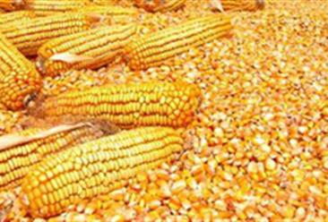 2018年10月18日全国玉米价格行情走势分析:有升有降