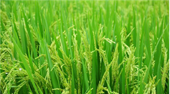 智慧农业助力乡村振兴 2018年智慧农业发展态势分析(附图表)
