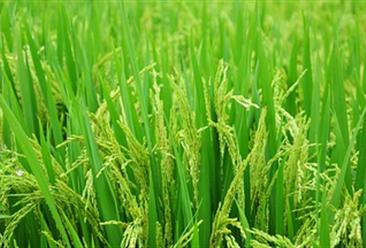 生态农业助推乡村振兴 生态农业成功案例分析(图)
