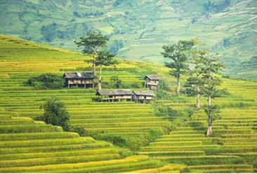什么是生态农业?生态农业的建设需遵循这八大原则(图)