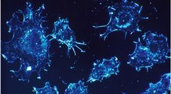 央視五大名嘴都因癌癥離世?全球癌癥發病率及死亡率持續上升(圖)