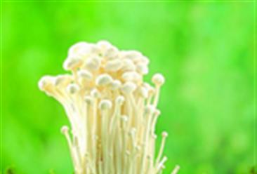 依靠金针菇年营收13亿  农产品行业该吸取哪些经验?