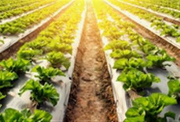 """发展生态循环农业意义重大 种植专业合作社设施农业园区玩转""""绿加黑"""""""
