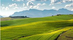 智慧农业发展潜力巨大 创业者该以怎样的方式切入智慧农业?