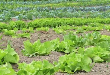 国内外共享农庄有何不同?四大共享农庄成功案例分析(图)
