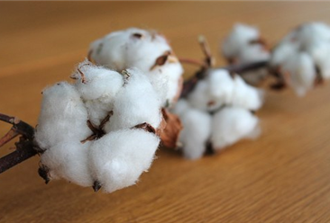 2018年1-11月中国棉花出口量为44732吨 同比增长204.1%