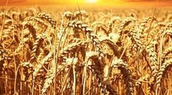 智慧農業市場前景廣闊 2025年全球智慧農業市場規模將近700億美元