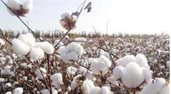 统计局2018年全国棉花产量、种植面积数据解读