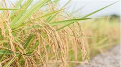 2018年農民收入預計超過14600元   2019全國鄉村振興實現良好開局