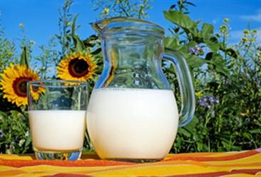中央一号文件:实施奶业振兴行动 加强优质奶源基地建设(图)