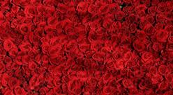 情人节鲜花销量暴增4成  2019年中国玫瑰花产业规模预测(图)