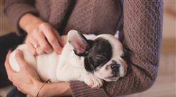 女子將遺產留給狗 寵物行業市場前景如何?(附產業鏈)