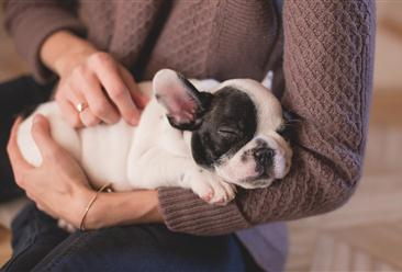 武汉养犬修订草案提交审议 加强养宠管理会抑制宠物行业发展吗?(图)
