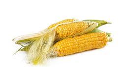 2019年8月玉米市场供需形势分析:国内玉米价格整体走势仍以稳为主