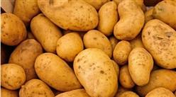 2019年5月马铃薯市场供需形势分析:后期薯价或下跌