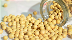 中美贸易战背景下首批俄大豆入境 中国成为俄罗斯大豆主要出口国