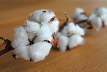 2019年1-6月中国棉花进口量为118万吨 同比增长73.4%