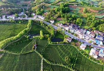 汉中市里八沟茶叶产业园项目案例