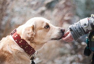 爱犬被拔17颗牙 2019宠物医疗行业发展现状分析(图)
