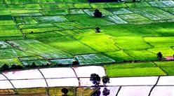 糧食安全白皮書發布 一文看懂新中國成立70周年農業產業的巨大成就(圖)