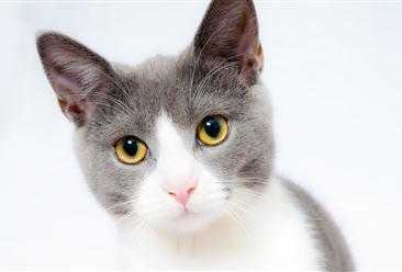 故宫巨型御猫吸引游客打卡 中国宠物行业发展现状分析(图)