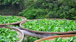 2019年中国茶业最受消费者认可的十大品牌出炉:这些茶叶品牌最受消费者认可!