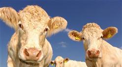 2020年起饲料中全面禁止添加抗生素?我国饲料产业发展现状如何?