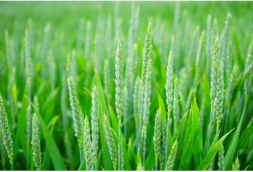 《焦作市市级现代农业产业园建设工作方案》印发  2022年全市创建20个市级现代农业产业园