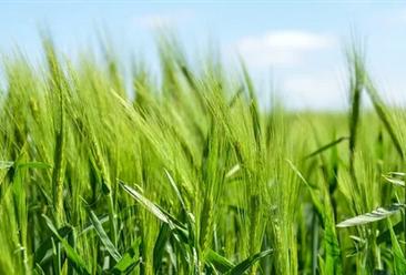 2019年安徽省农业生产总体平稳 粮食产量位居全国第四