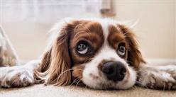 2020年全国宠物市场发展分析:宠物食品潜力大  宠物饲料增长快(图)