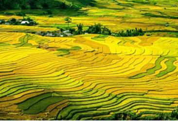 2020年重点支持创建优质粮油等产业园 创建现代农业产业园需满足这些条件!(附政策)