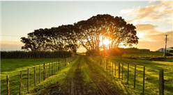 《新型农业经营主体和服务主体高质量发展规划(2020-2022年)》印发 2022年全国家庭农场数量达100万家