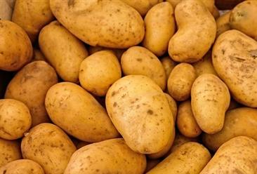 2020年5月国内马铃薯市场供需形势及价格预测:薯价下跌可能性较大