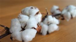 2020年1-4月中国棉花进口量及金额增长情况分析