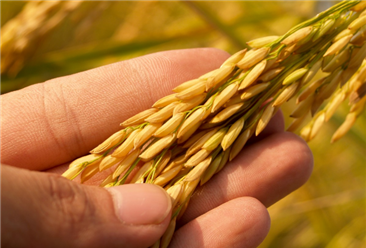 2020年1-5月中国粮食出口量为161万吨 同比下降6.6%