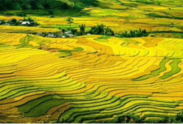 到2025年要建设300个现代农业产业园  现有国家现代农业产业园名单汇总一览