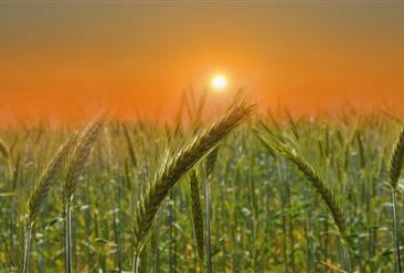 2020年上半年农业农村经济运行分析:总体平稳、稳中向好(附图表)