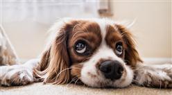 犬只未植入芯片将被视为无证养犬?2020年宠物行业发展前景分析(附产业链)