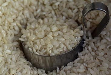 2020年7月29日河北省最新大米价格行情走势分析